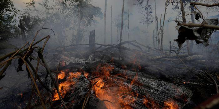 The Intercept: Uno dei principali donatori di Trump sarebbe dietro la deforestazione dell'Amazzonia