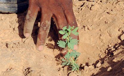 La bonifica del Sahara come strumento per fermare la fuga dall'Africa e dalla fame