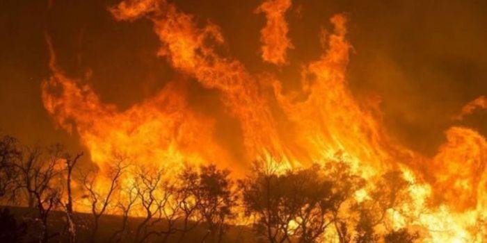 Risultati immagini per foresta pluviale africa incendio